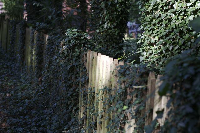 Zaungestaltung eines Schattengartens