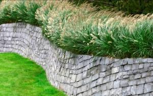 Das Bild zeigt die einsetzende Gräserblüte von Pennisetum alopecuroides, zu deutsch auch Lampenputzergras genannt. Dieses Phänomen begeistert jedes Jahr viele Pflanzenliebhaber.