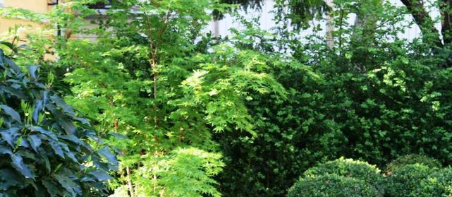 Schattengarten - Gestaltung mit Pflanzen mit verschiedenen Blattgrün