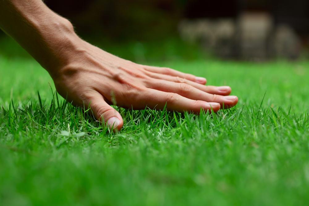 tipps und tricks nach der gartengestaltung durch living garden, Garten dekoo