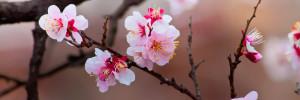 Frühling im Garten